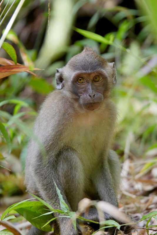 Khao Sok monkey