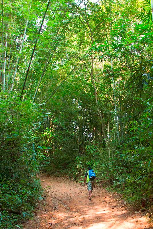 Khao Sok Trekking - Self-Guided