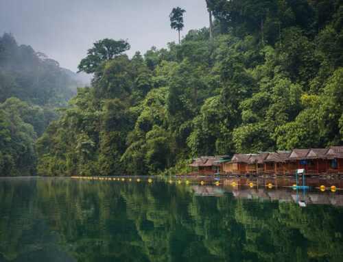 A Majestic Khao Sok Safari