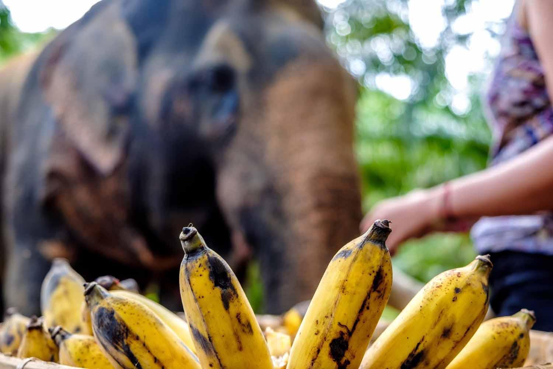 Khao Sok elephant