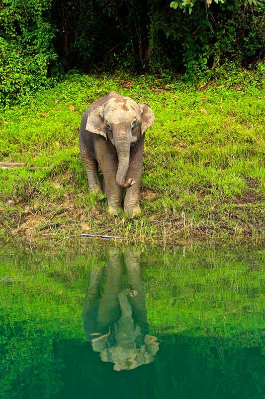 Elephant seen on a Cheow Lan lake trip