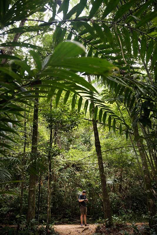 Trekking in Klong Phanom National Park
